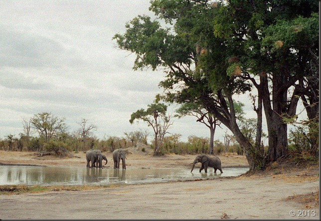 Hwange - waterhole and elephants 4