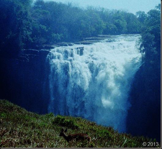 Victoria Falls and buck