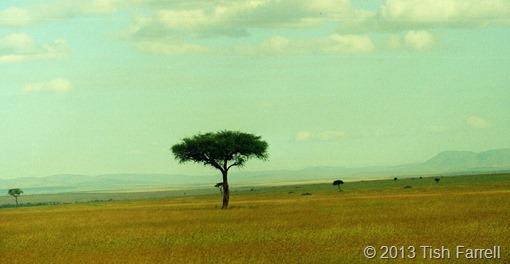 Mara grassland 4 (2)