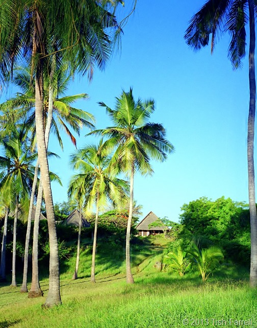 Capricho and palms