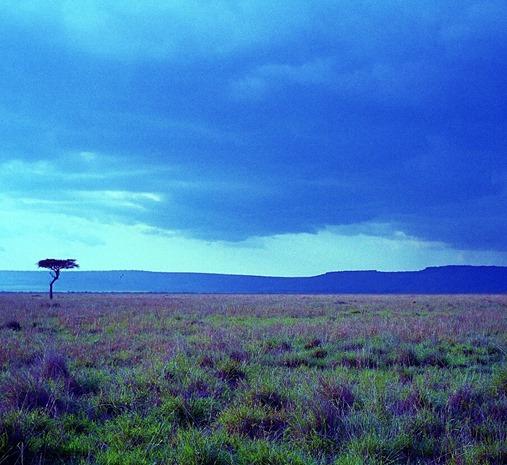 Mara grassland 3