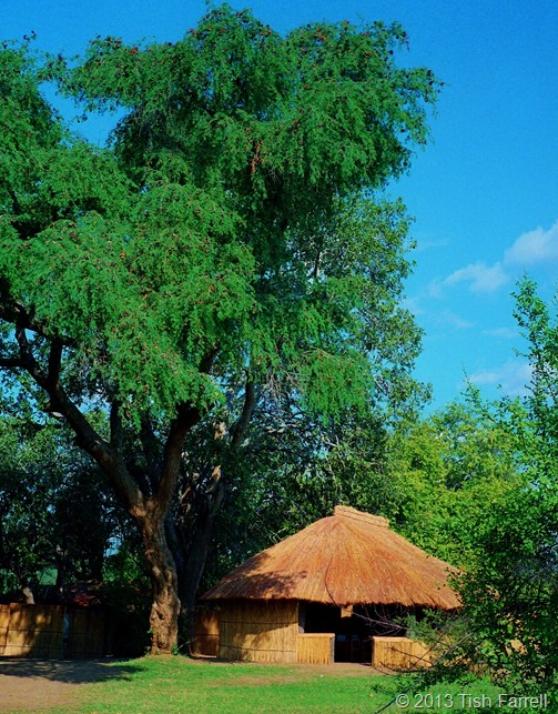 South Luangwa - Tenatena camp dining room under a rain tree