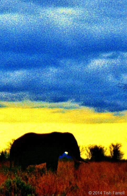 lone elephant at twilight