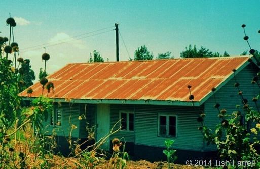 Kikuyu farmstead 24