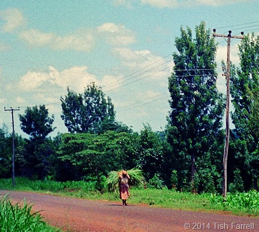 Kikuyu lane with woman carrying napier grass