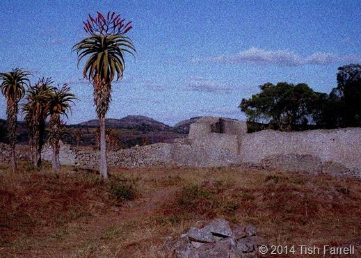 aloes and Great Zimbabwe