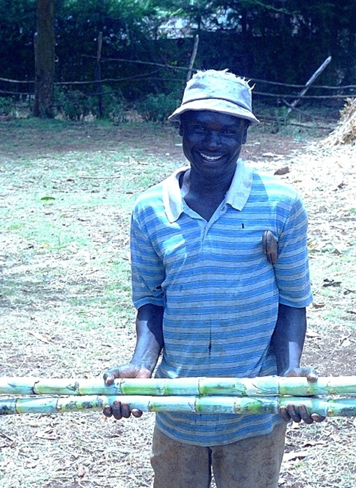 Kikuyu farmer and sugar cane
