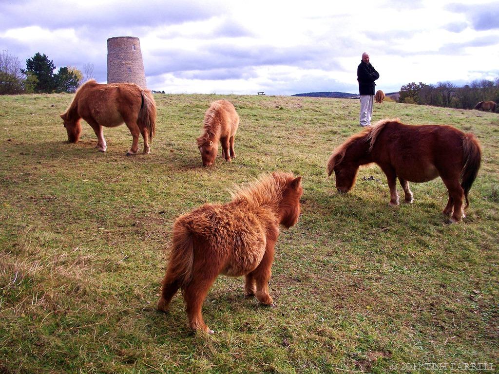 rambling tales my little pony windmills olympian dreams tish
