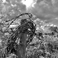 To And From the Allotment: Seeing Things In Black & White