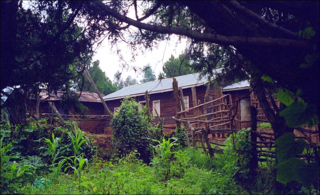 Kikuyu farmstead 1
