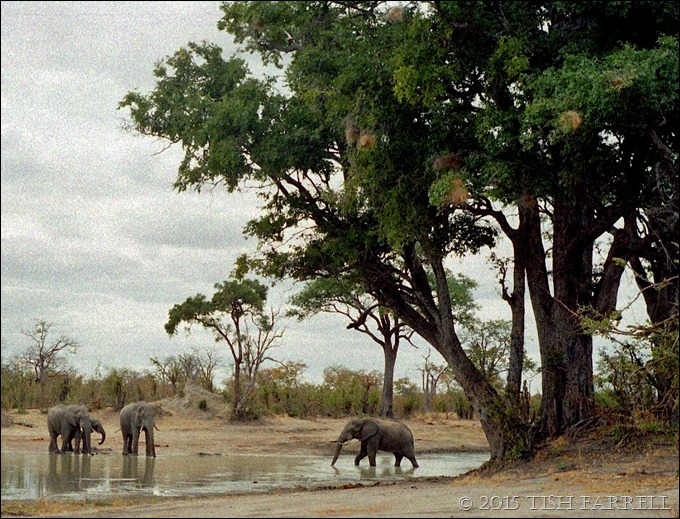 Hwange - waterhole and elephants 3