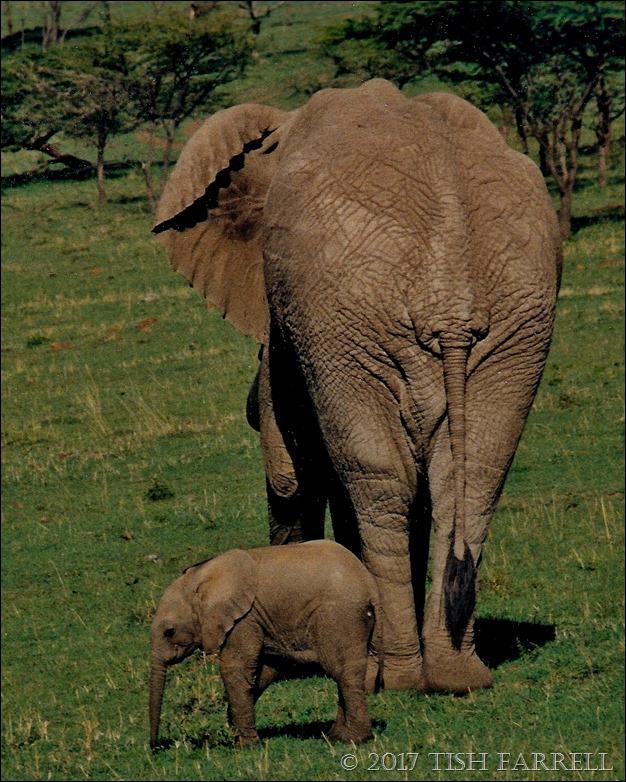 elephants_0001