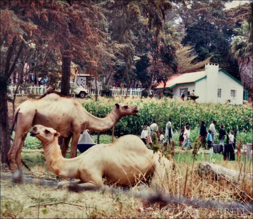 Agri show 1995 c_0013