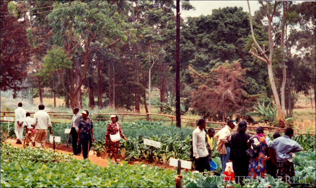 Agri show 1995 c_0016 - Copy
