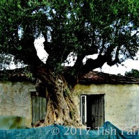 On The Path To Harakopio ~ Peroulia Dreaming 13