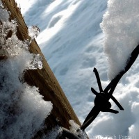 A Congruency Of Ice And Wire