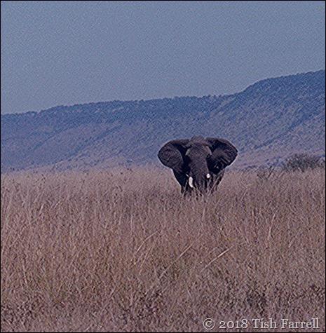 elephant_0001 b