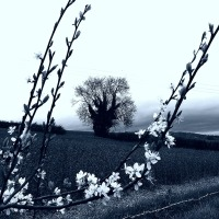 April's Changing Seasons ~ Bleak With Bright Blooming Intervals