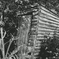 Old Allotment Shed And Artichoke