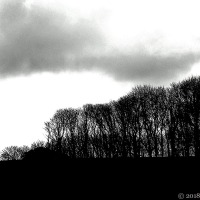 Storm-Cropped Trees