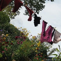 Today ~ Airing My Clean Laundry In Public and A Storm Rising