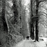 A Path For All Seasons ~ Wenlock's Linden Walk