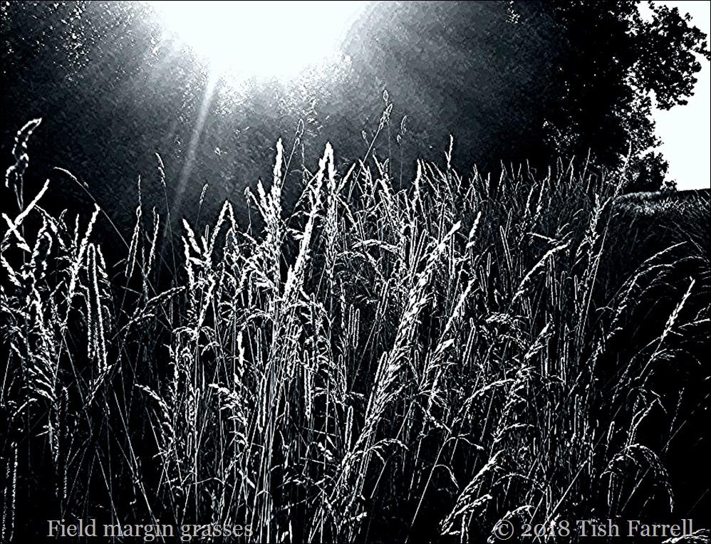 IMG_3721 monochrome