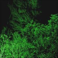 Seeking Light In The Night Garden ~ More From Powys Castle