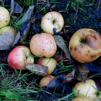 Fallen Harvest ~ Winter Feast For The Small Creatures