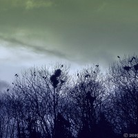 Changing Seasons In March ~ Days Of Light And Shadow