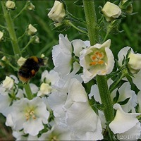 Today Is World Bee Day