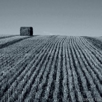 After The Harvest: Stubble And Straw