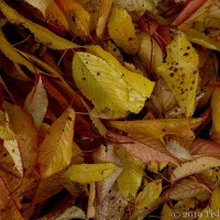 Autumn Leaves A lot To Be Desired ~ Again