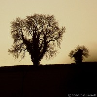Backlight: Big Tree, Little Tree