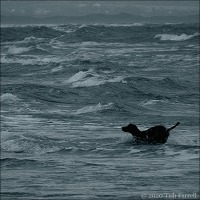 Canine Delight In Stormy Water