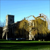 On The Church Green ~ Willow-Light