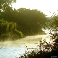 Tales From The Riverbank ~ Breakfast With Hippos