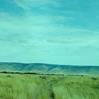 More From The Mara ~ Near And Far Beneath The Oloololo Escarpment