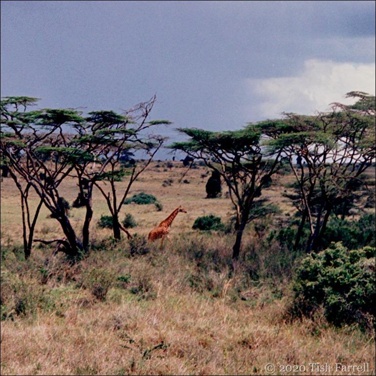 Kenya Nairobi Park_0002