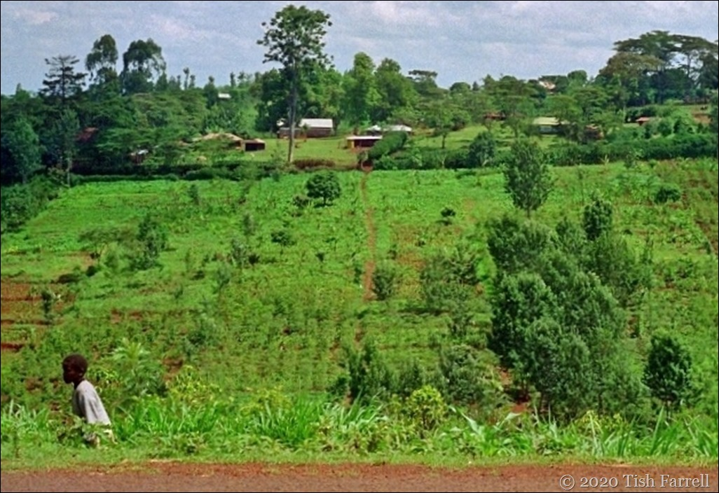 Kikuyu farmstead 22 - Copy (2)