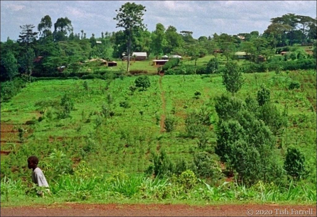 Kikuyu farmstead 22 - Copy (2)