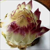 Deconstructed Artichokes And How I Tackle Them