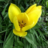 If this tulip could speak...