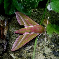 Bright Moth