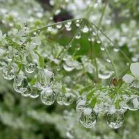 After The Rain Some Garden Magic
