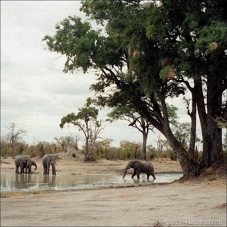Hwange - waterhole and elephants 4sq