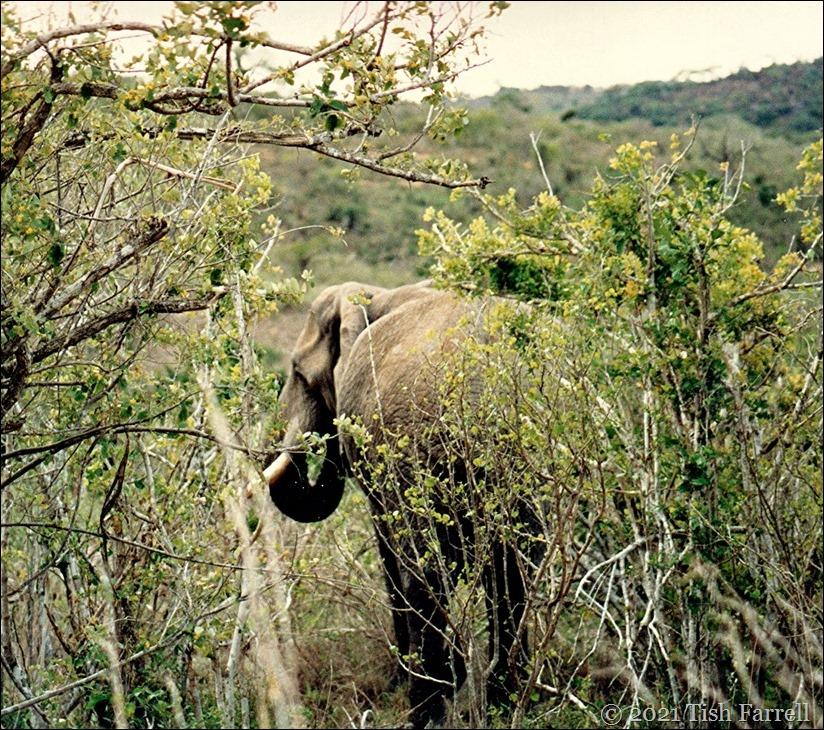 Mwalunganji elephants 2
