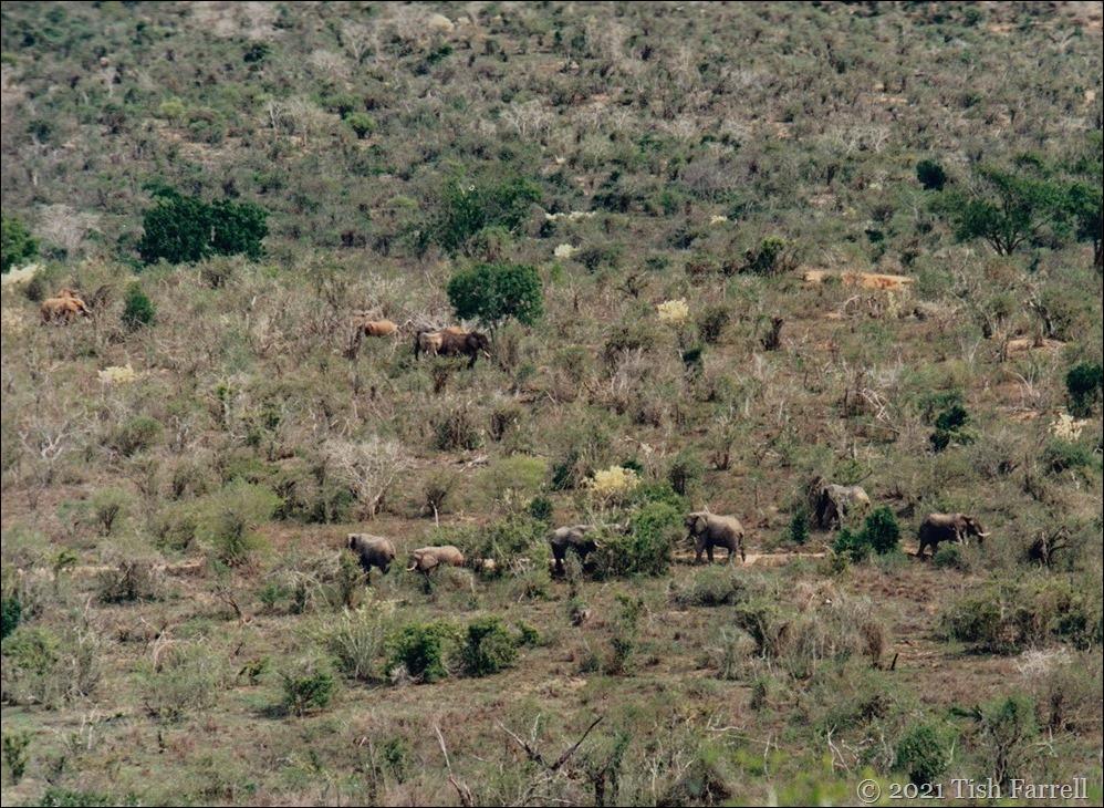 Mwalunganji elephants 3