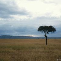 Taking The Broad View ~ Mara Grasslands