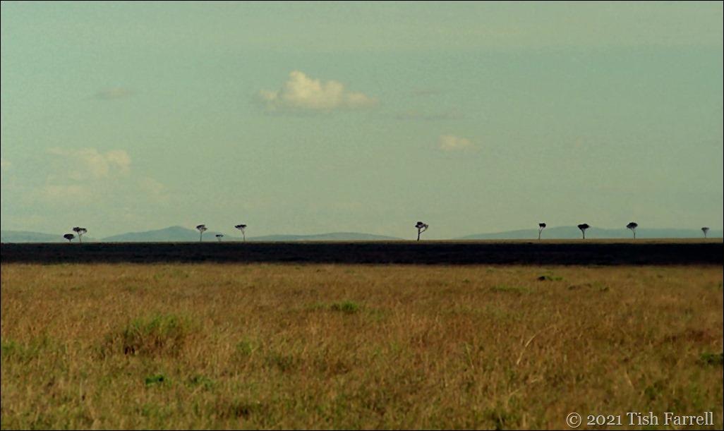 mulului trees Mara 14